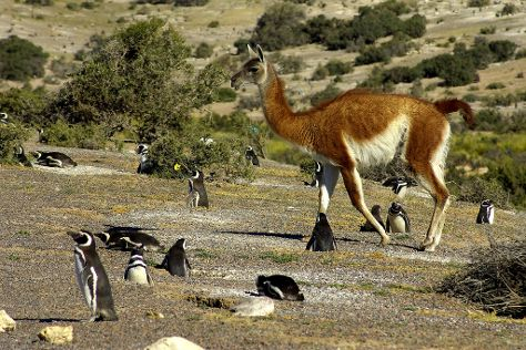 Punta Tombo, Puerto Madryn, Argentina