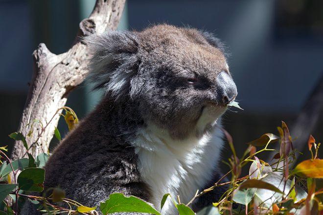 Gorge Wildlife Park, Cudlee Creek, Australia