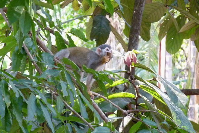 Bosque da Ciencia, Manaus, Brazil