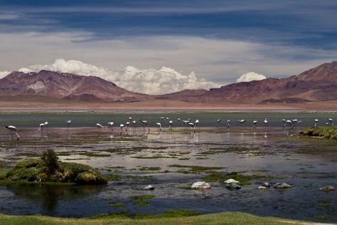 Reserva Nacional de Flamencos, San Pedro de Atacama, Chile
