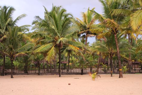 Marari Beach, Alappuzha, India