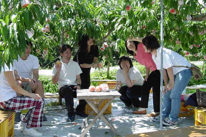 Nakagomi Fruit Orchard, Minami Alps, Japan