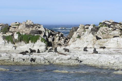 Ohau Point Seal Colony, Kaikoura, New Zealand
