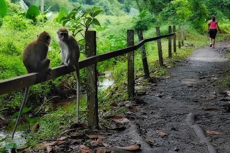 MacRitchie Nature Trail, Singapore, Singapore